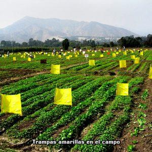 trampas amarillas en el campo
