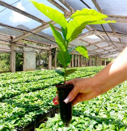 tubetes agricolas lima